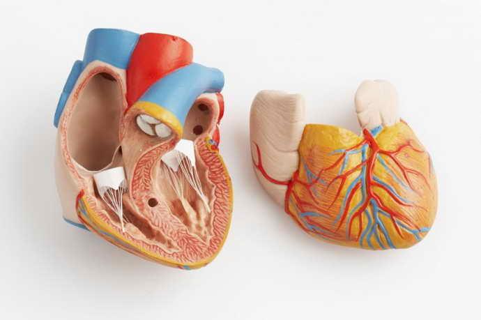 Осложнения, к которым может привести кандидозный стоматит