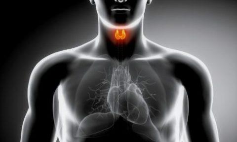 Фото: патологическая функциональность щитовидки в организме человека