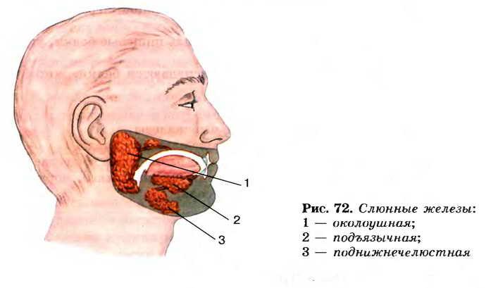 Симптоматика и лечение поражений подчелюстной слюнной железы