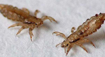 Что необходимо знать о паразитах в организме каждому человеку?