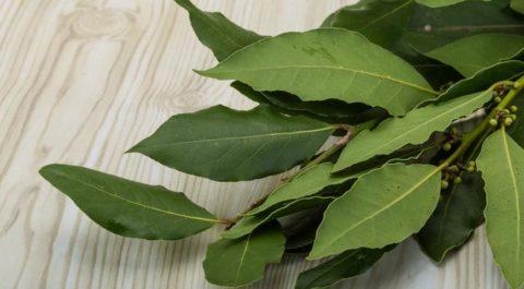 Лавровый лист (на фото) эффективно очищает организм и стимулирует обменные процессы.