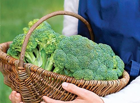 Лучше сохраняет витамины капуста в замороженном виде