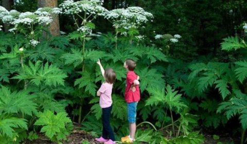 Рассказывайте детям обо всех опасностях природы-матушки и показывайте по возможности примеры с безопасного расстояния