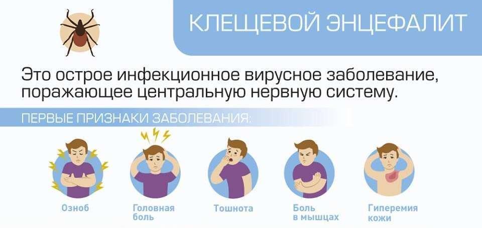 Симптомы клещевого энцифалита