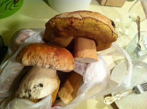 Если гриб червивый, это еще не значит, что он неопасен
