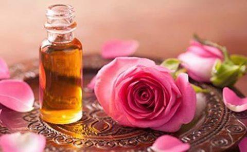 Чайная роза для масляного экстракта