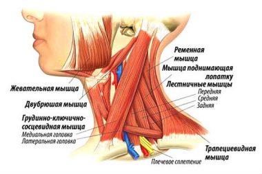 миозит мышц шеи