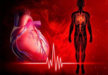 сердце и человек