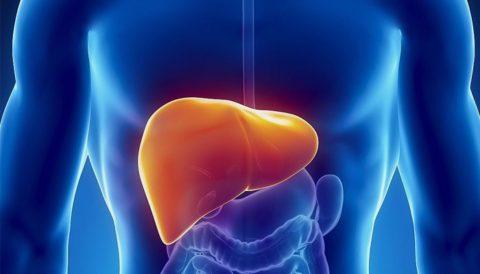 Загрязнение печени токсинами и шлаками является одной из причин развития множества заболеваний.