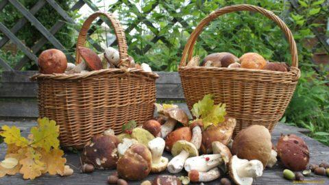Главное, чтобы грибной «урожай» был безопасным