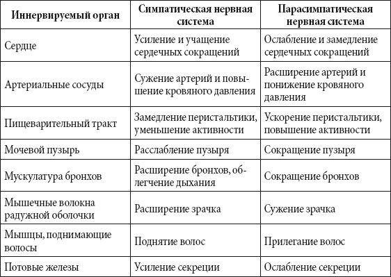 Таблица симпатической и парасимпатической нервной системы