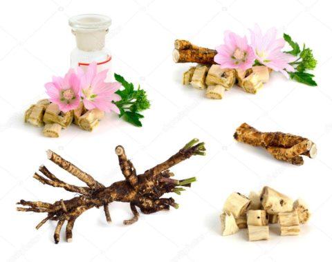 Алтей – народное средство для лечения отравлений
