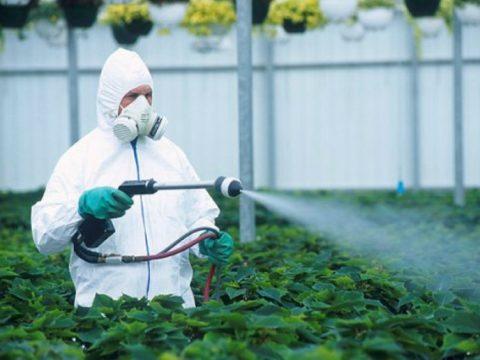 Пестициды оказывают пагубное влияние на человеческий организм