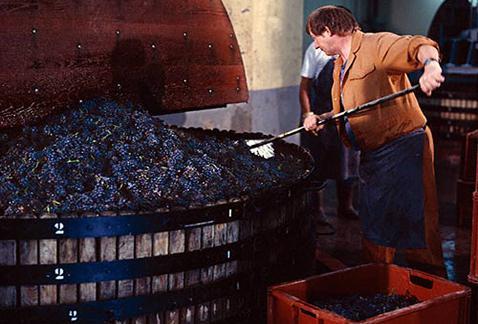 Суррогатные вина