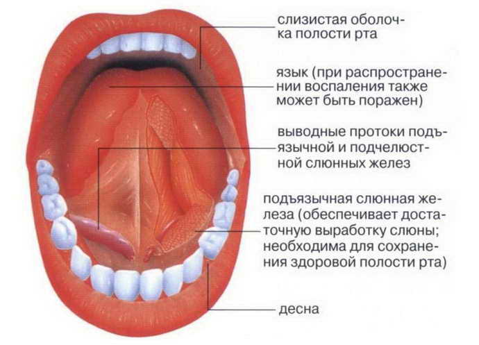 воспаление под языком чем опасно