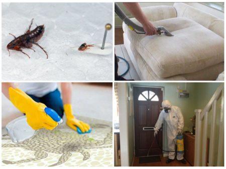 Какие средства помогают избавиться от земляных блох в доме
