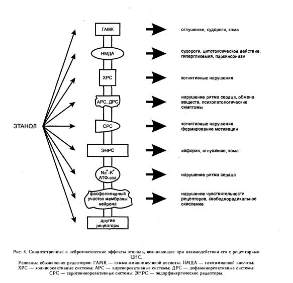 Действие этанола на различные системы организма