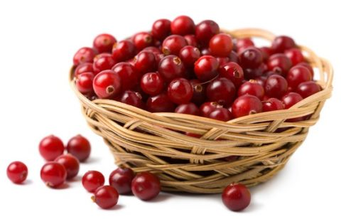 Ягоды клюквы для кровеносных и лимфатических сосудов