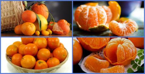 Устранить тошноту помогут несколько долек цитрусовых фруктов (на фото).