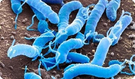 Ох уж эти микробы!