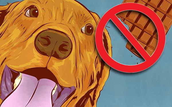 Собакам вреден шоколад