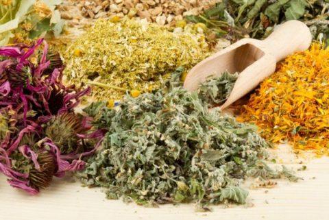 Очистить организм можно и посредством приема травяных сборов.