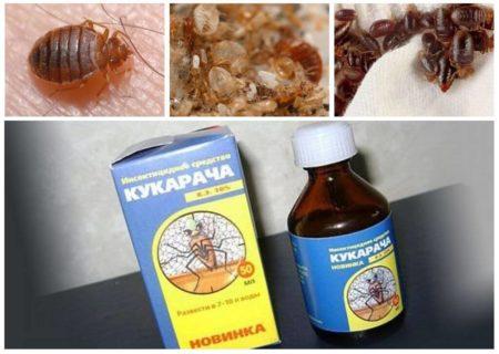 Лучшие средства от квартирных клопов, список популярных препаратов