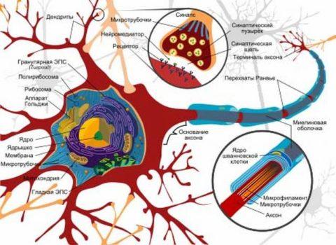 Нарушение продвижения и передачи нервного импульса