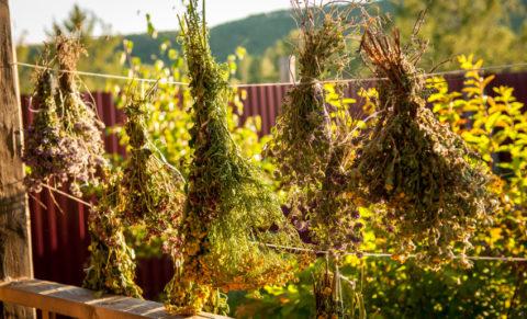 Главное подобрать травяной сбор правильно