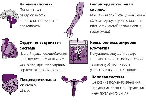 Влияние гормонов на системы организма