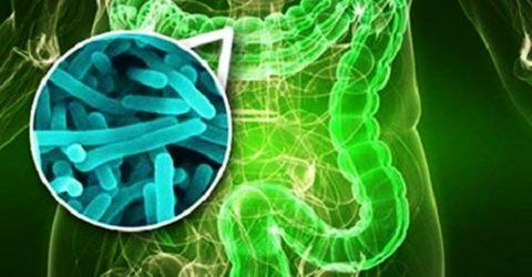 Адсорбенты помогают бороться с патогенными бактериями, попавшими в кишечник