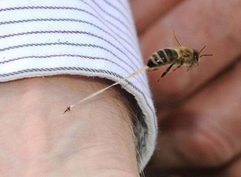 Пчелы жалят в неприкрытые участки тела