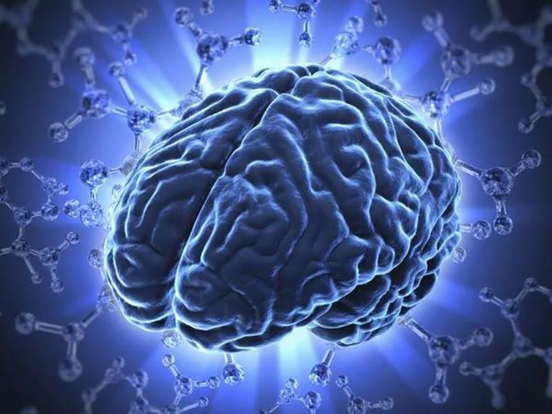 Головной мозг – орган-мишень для нейротоксических ядов