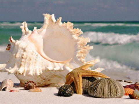 Шипы моллюсков, морских звезд ядовиты и вызывают ожог и отравление организма