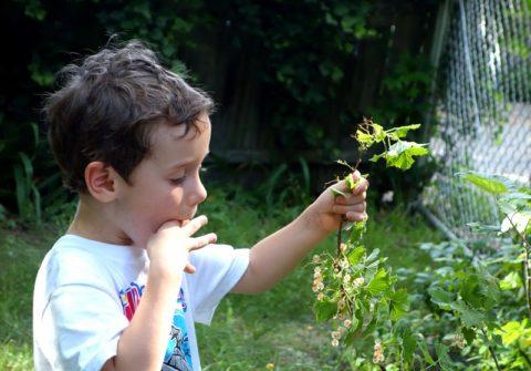 На природе, на даче и в путешествиях нужно особенно внимательно следить за детьми