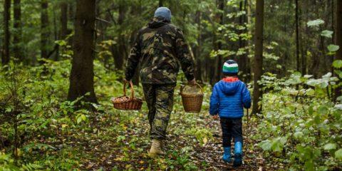Пусть походы в лес будут наполнены только положительными эмоциями