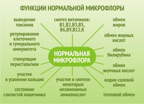Все функции микрофлоры кишечника