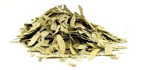 Листья сенны – природное средство для оздоровления кишечника.