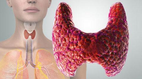 Постоянный контроль за щитовидкой как один из методов предупреждения заболеваний