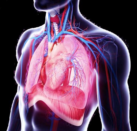 Развивается недостаточность систем дыхания и кровообращения