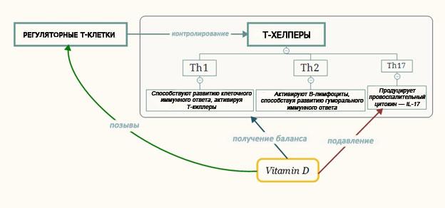 Реакция Th17: схема