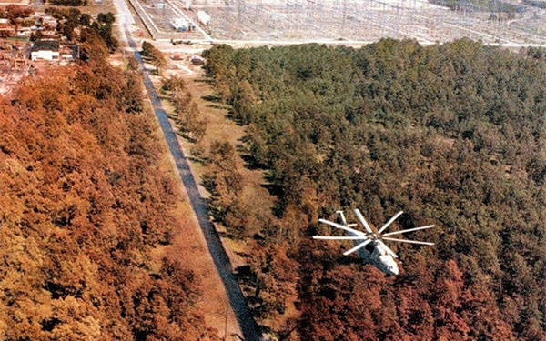 Чернобыль рыжий лес