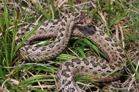 Неподвижную змею заметить довольно сложно