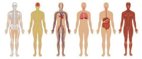 Поражаются почти все системы органов