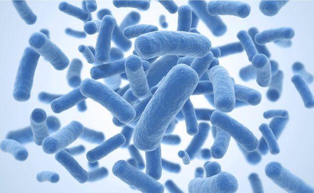 бактерии ротовой полости