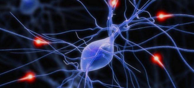 БАС: боковой амиотрофический склероз