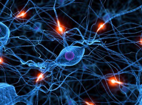 Нейротоксичные вещества приводят к повреждению нервных клеток и связей между ними