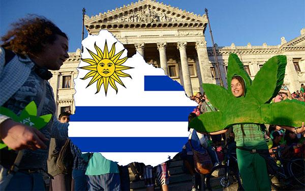 Легализация марихуаны в Уругвае