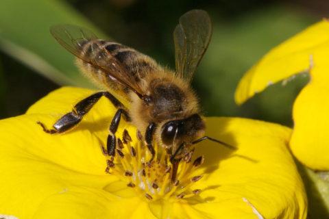 Активность перепончатокрылых насекомых резко возрастает с приходом тепла
