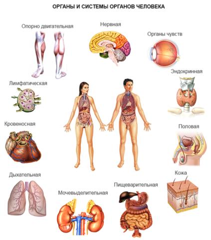 Негативное влияние оказывается почти на все системы органов